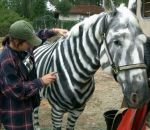Я знал, что зебра это покрашеная лошадь