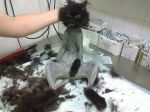 Подстригли