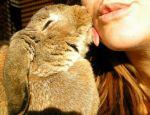 Нежный кролик