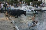 Злобный бык